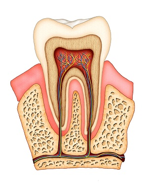 aurora-dental-root-canal